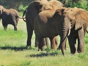 Taste of Tanzania Tour Photos