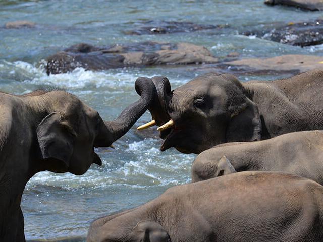 Best of Sri Lanka Mini Tour - Elephant & Hills Photos