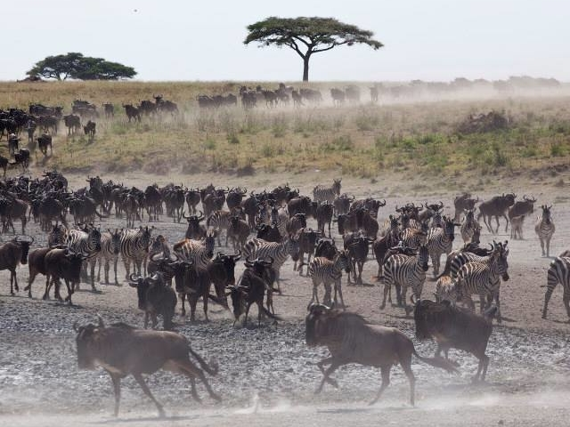 Safari Migration Photos