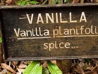 Zanzibar's Spice Plantations