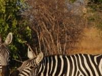 Tsavo East National Park Safari