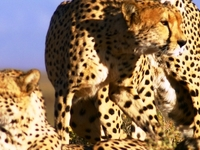 Full Day Cape Town Safari Tour