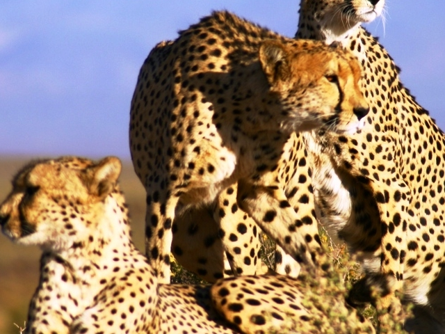 Full Day Cape Town Safari Tour Photos