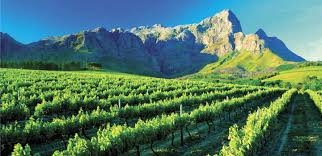 Full Day Cape Winelands Tour Photos