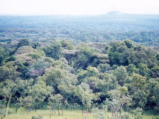 Special Western Safari Photos
