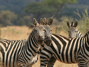 Serengeti Safari Family Holiday Photos