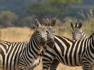 Serengeti Safari Family Holiday Fotos