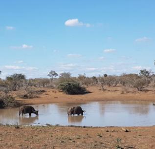 Enjoy Madikwe Safaris Package Photos
