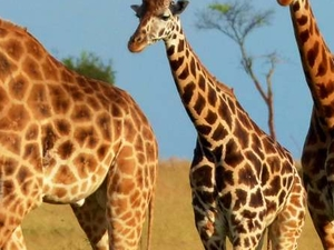 Murchison Falls National Park Photos
