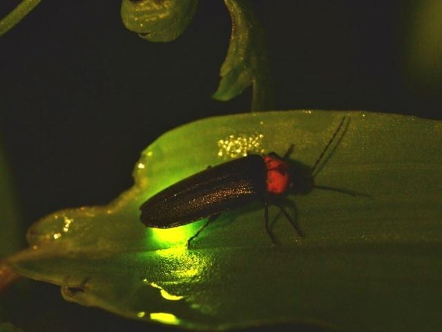 Kuala Selangor & Fireflies River Cruise Photos