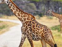 Selous Game Reserve And Zanzibar Safari