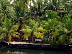 Munnar And Thekkady Tour Package Photos