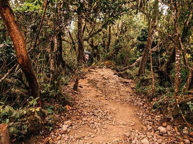 Kilimanjaro Machame Route Photos