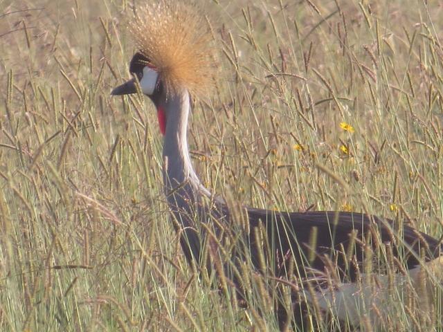 Nairobi National Park Birding Photos