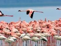 Maasai Mara and Lake Nakuru