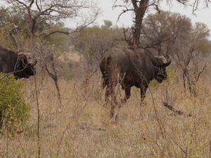 Sabi Sand Safari in a Luxury Tented Camp for 4-Days Photos