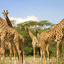 Family Safaris Kubwa Five