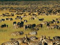 Decagon Safari: Great Wildebeest Migrations