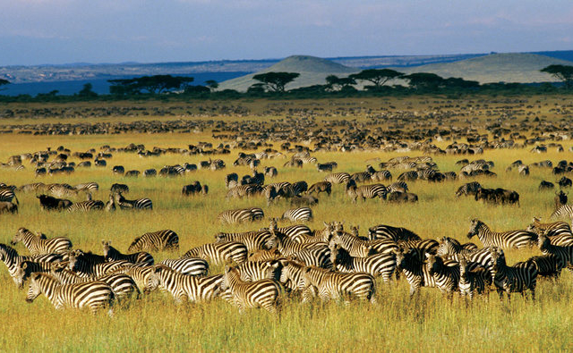 Decagon Safari: Great Wildebeest Migrations Photos