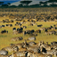 Great Migration Kubw Five Safaris