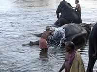 Kerala's Central Travancore