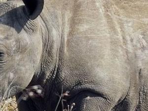 Mkomazi National Park Photos