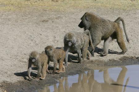 Kenya Safari Photos