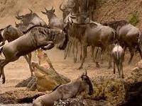 Sksn 001 3 Days Maasai Mara Camping Safari