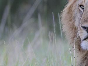 Maasai Mara Pre-Migration Safari Photos