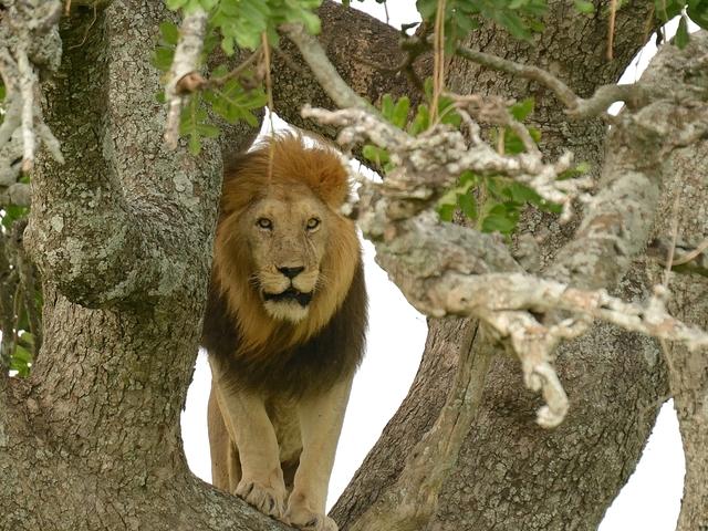 Arusha, Manyara, Ngorongoro Escapade Photos
