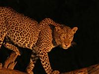 Tsavo East & West, Amboseli, Lake Nakuru & Masai Mara