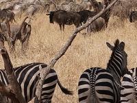 10 Days 9 Nights Kenya Tanzania Safari