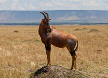 Faboulous Flamingo and Masai Mara Safari Photos