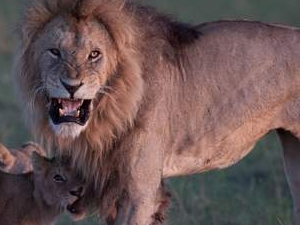 Daily Joining Safari to Masai Mara Fotos