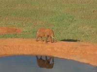 Mount Kenya Safari