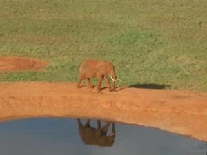 Mount Kenya Safari Photos