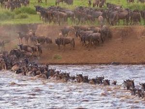 Enchoro Wildlife Camp Special Offers Fotos