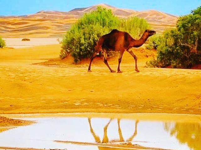 Morocco Desert Tours from Marrakech Photos