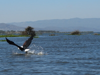 22 Mataresse Kris Lake Nakuru Dsc01795