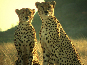 Nairobi, Amboseli, Nakuru and Maasai Mara x2 Fotos