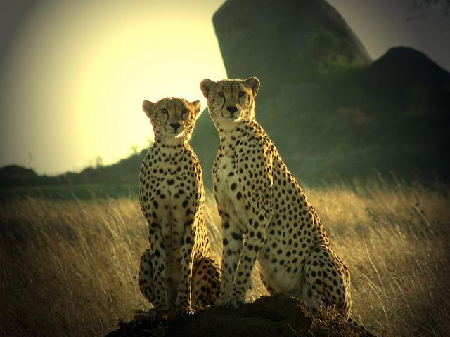Nairobi, Amboseli, Nakuru and Maasai Mara x2 Photos
