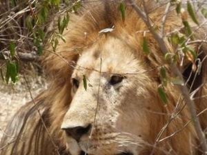 Lake Nakuru, Masai Mara and TsavoWest Safari Photos