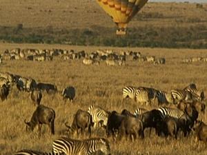 Home Coming Offer - Maasai Mara Fotos