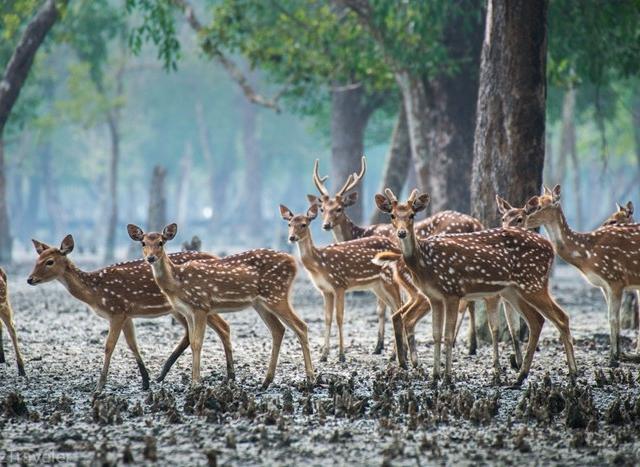 World Heritage Tour in Bangladesh Photos