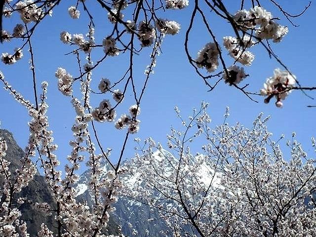 Spring Blossom Hunza Valley Photos
