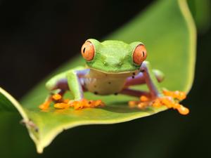 Costa Rica Explorer Photos