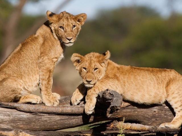 The Magical Beauty of Kenya Photos
