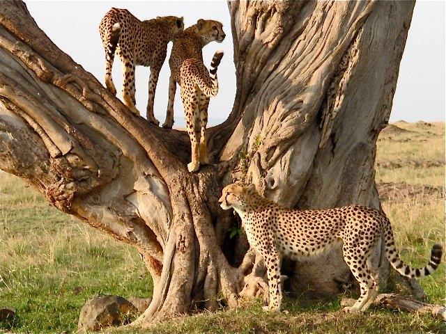 Hornbill Safaris Photos