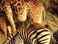 Kenya Game Parks Wildlife