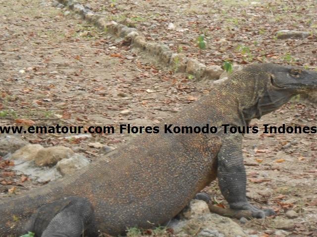 Tours Komodo National Park Photos